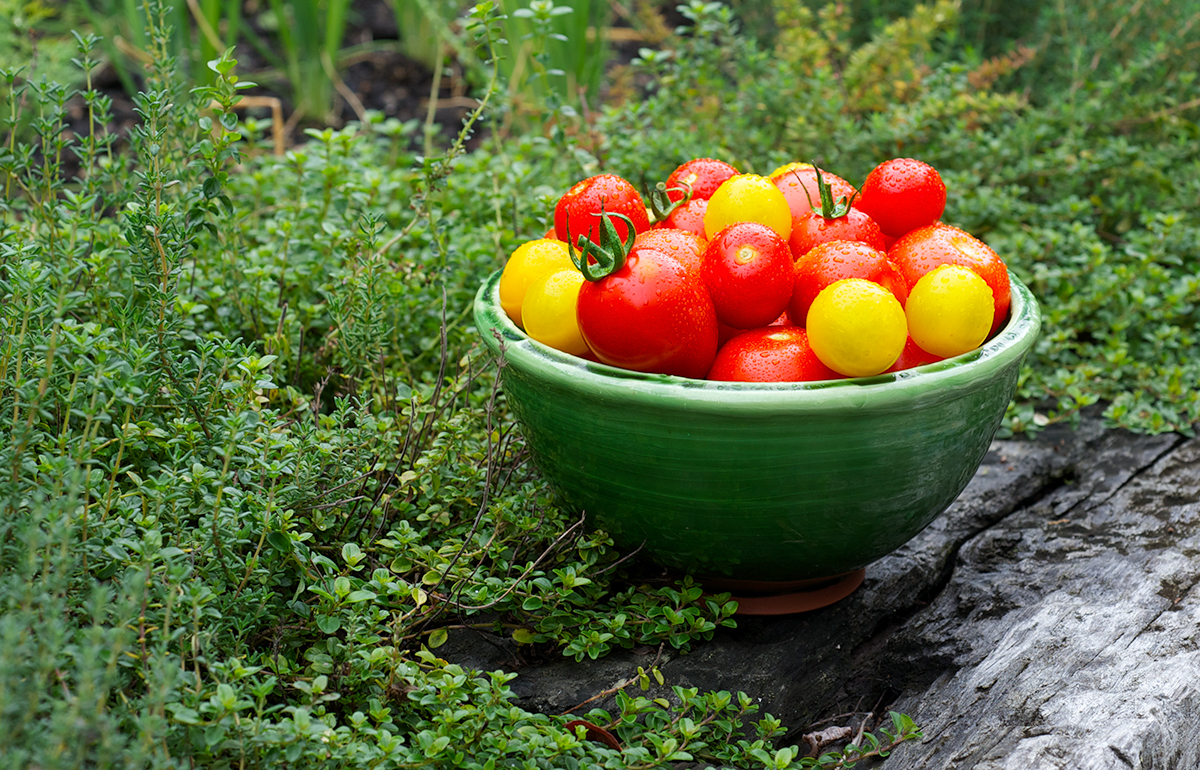 Tomatoes, Garden, FoodPhotography, Photography, BookCover, Tableau_Creative, TableauCreative,